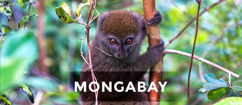 news-mongabay